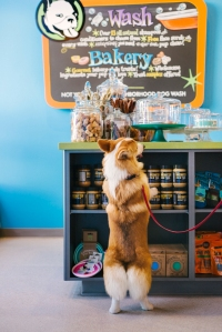 chester-dog-photo-bakery-counter
