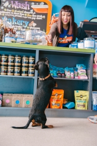 lucas-dog-k9-scrub-club-bakery-counter