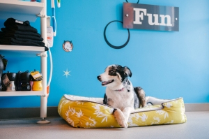 bella-dog-photo-bamboo-bed
