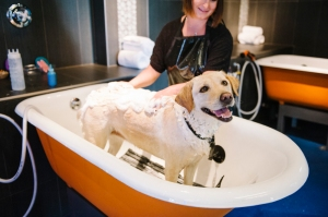 honey-dog-photo-bathtub