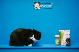 vincent-cat-photo-k9-scrub-club