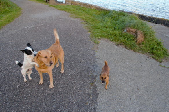 Check out the Barking Lot for tons of pics of San Francisco's pups!