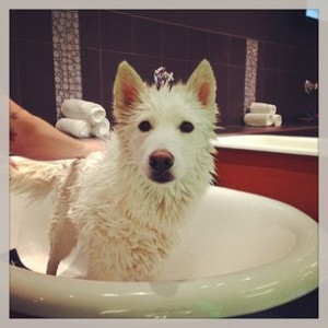 Dog in Bath Tub
